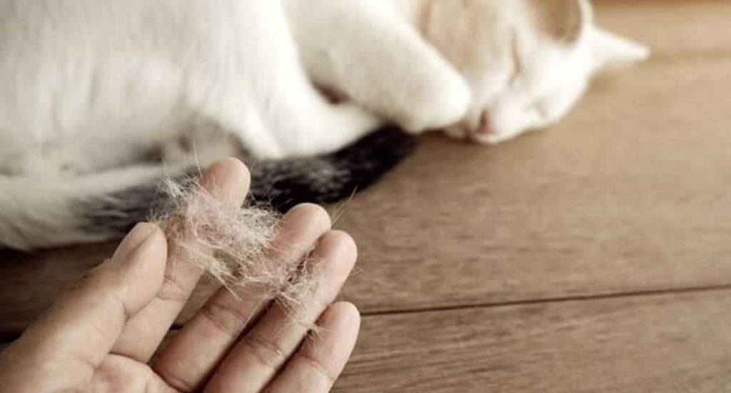 Tips Membersihkan Tumpukan Bulu Hewan di Karpet Kesayangan